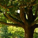 emergency tree removal new jersey