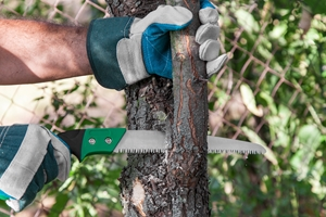 Tree Maintenance new jersey