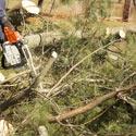 tree stump removal new jersey