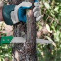 new jersey tree trimming service