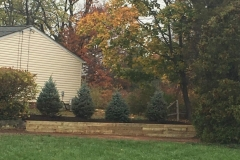 Retaining Wall and Blue Spruce Trees in Hillsborough NJ