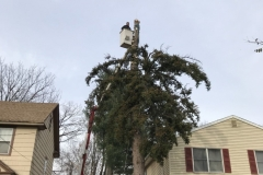 spruce-tree-and-stump-removal-somerville-nj-004