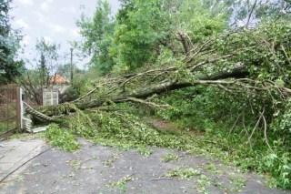 Storms cause tree damage