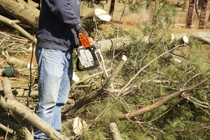 storm cleanup new jersey