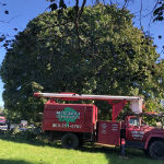 Tree pruning and shaping in front and back of the house, Hillsborough NJ