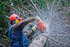 tree removal new jersey