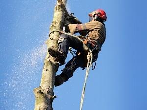 tree services branchburg nj