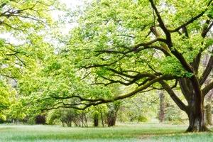 tree services warren nj