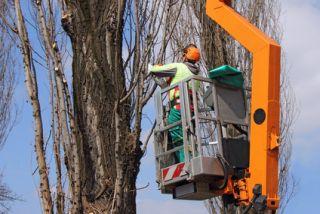 Tree Trimming Basking Ridge, NJ