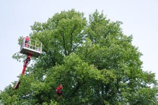 Tree Trimming Bernardsville, NJ
