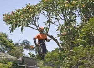 Tree Trimming Martinsville, NJ