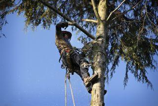 Tree Trimming Millstone, NJ