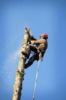 Tree Trimming Neshanic, NJ