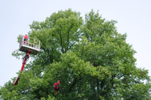 tree trimming franklin township