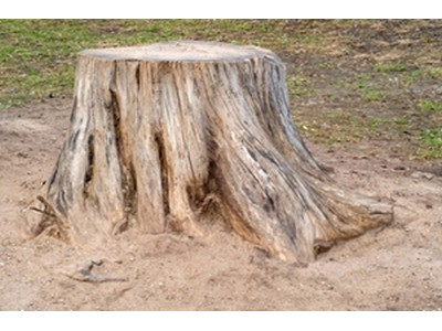 New Jersey Stump Removal