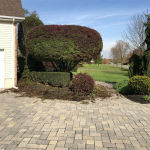 Japanese Maple Trimmed and Pruned in Ringoes NJ